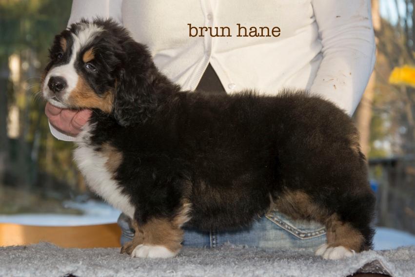 brun1